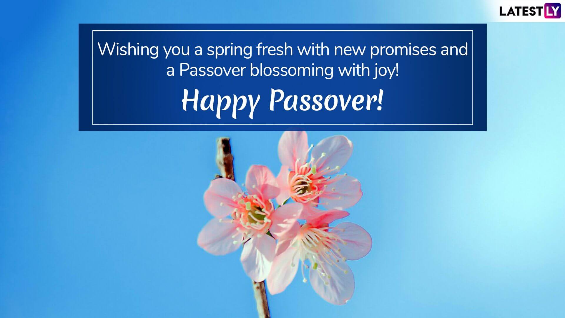 Happy Passover Wallpapers